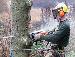 Tree Removalin Torrance